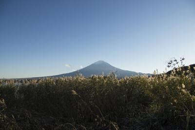 日本富士山的芦苇图片