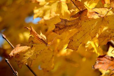 秋天、叶、性质