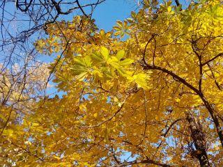 金色的秋天、卢日尼基体育场、叶子