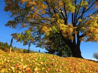 秋、树、颜色