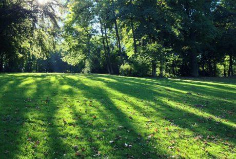 阳光照射到公园的草地上
