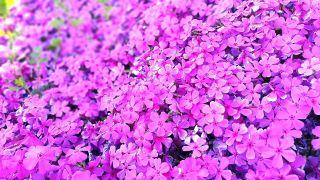 鲜艳的小花朵背景图