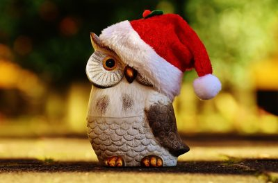 戴圣诞帽的猫头鹰图片