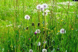 草、草地、花