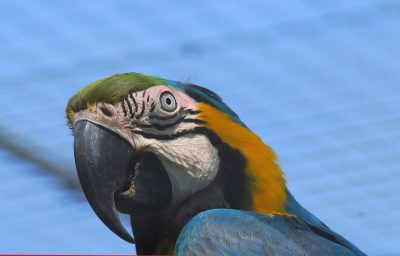 Ara、鹦鹉、热带