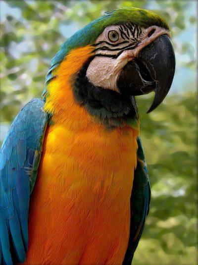 鹦鹉、鸟、多彩