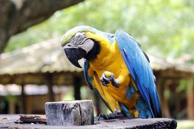 Arara、红色的金刚鹦鹉、动物