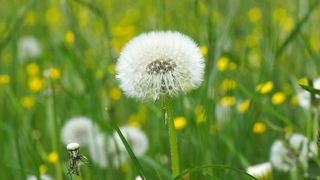 草地、植物、草