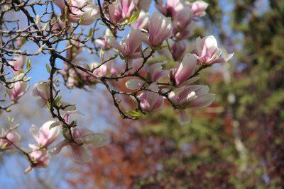 花、枝杈、树