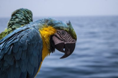 鹦鹉、海盗、宝