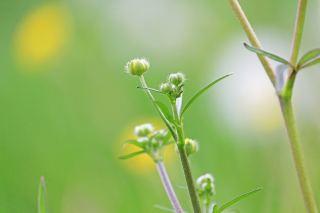 春天的植物背景