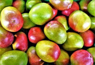 水果、食品、芒果