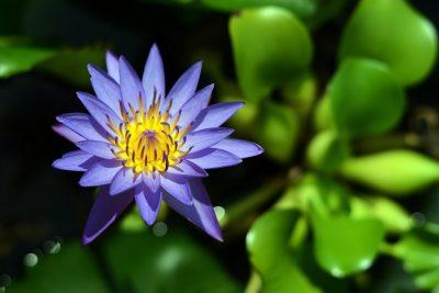自然、植物区系、花
