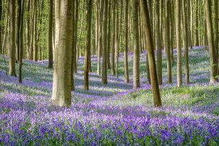 树林中的紫色花朵