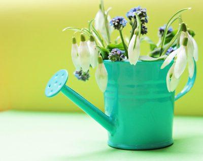 花壶里的雪滴花