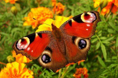 性质、蝴蝶的一天、花