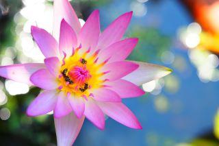 花、植物、大自然