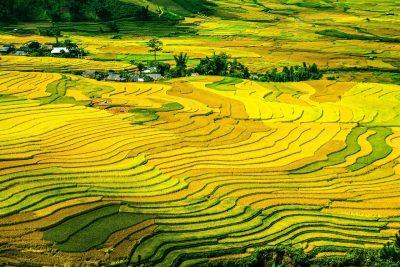 水稻梯田、稻田、字段