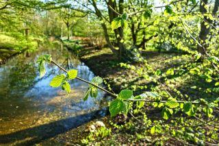 春天阳光下的树枝