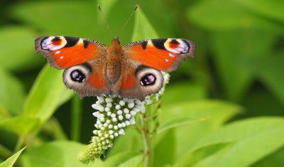 性质、蝴蝶、孔雀的一天