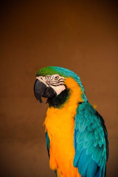 鹦鹉、鸟、热带