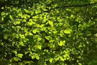 绿叶背景图