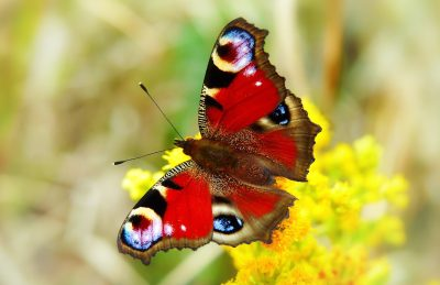 彩绘孔雀、昆虫、蝴蝶的一天