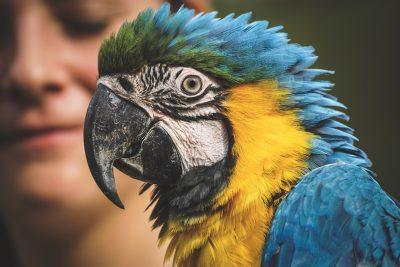 Ara、鹦鹉、动物世界
