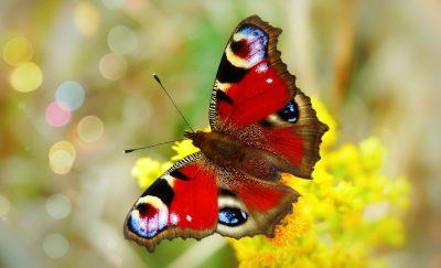 彩绘孔雀、蝴蝶的一天、昆虫