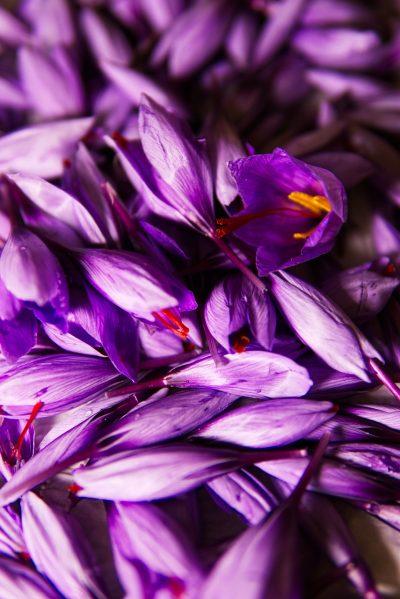 藏红花、香料、花蕊