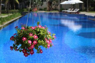 游泳池与花卉