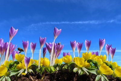蓝天下的花朵