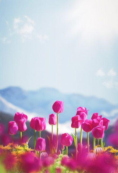 春、鲜花、郁金香