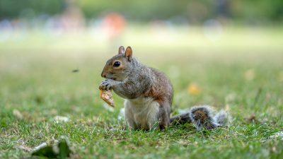 松鼠、公园、可爱