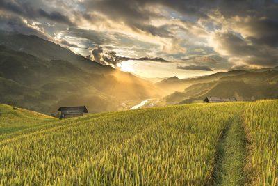 越南、米、稻田