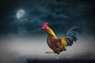 动物、夜、月亮