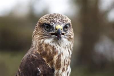 鹰的图片 4270×2846