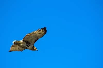 鹰的图片 4096×2730