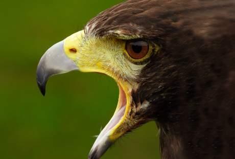 鹰的图片 3220×2414