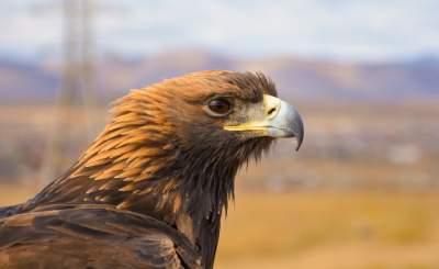 鹰的图片 3646×2231