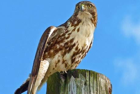 鹰的图片 2022×2844