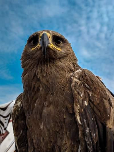 鹰的图片 3036×4048