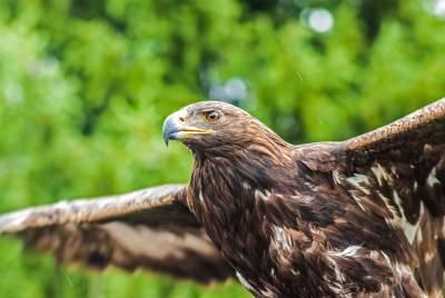 鹰的图片 3872×2592