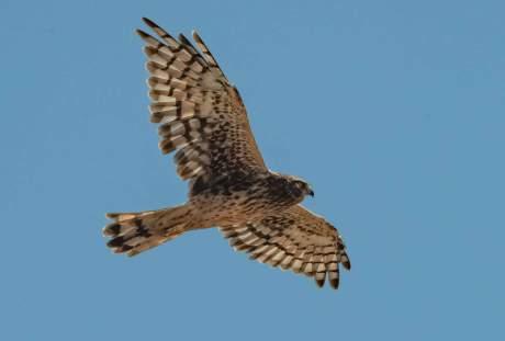鹰的图片 2787×1859