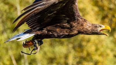 鹰的图片 5369×3020