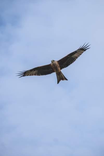 鹰的图片 4000×6000