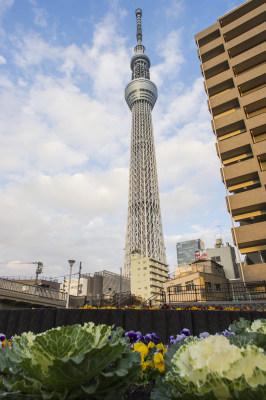 日本东京晴空塔(天空树) 4000×6016