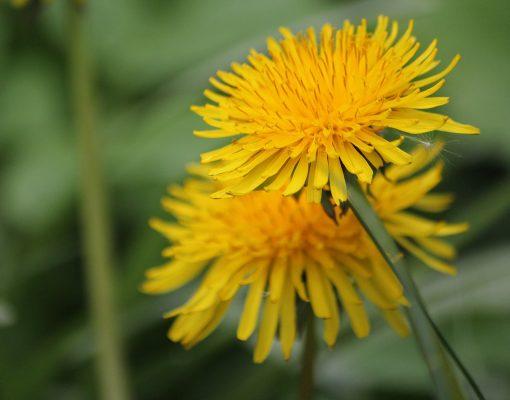 灯的花、花、黄色