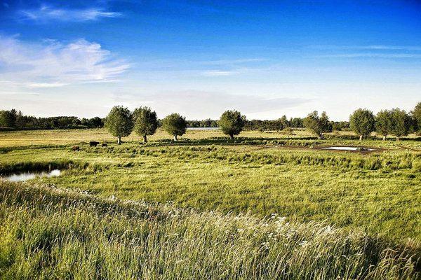 野外草地风景图片