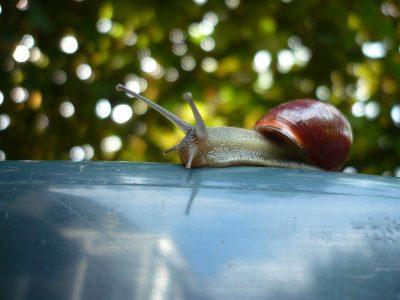一只正在爬行的蜗牛